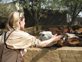 Mistress Troy visits Care for Cows in Vrindavan, India